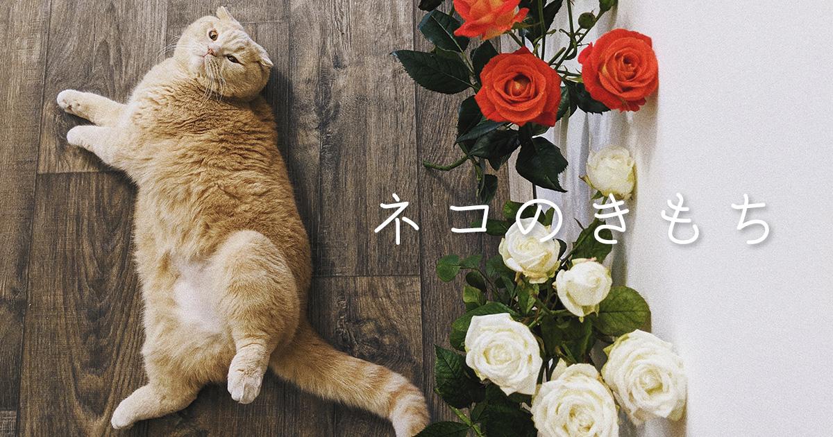 ネコのきもち